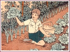 Old-fashioned garden, boy with lettuces