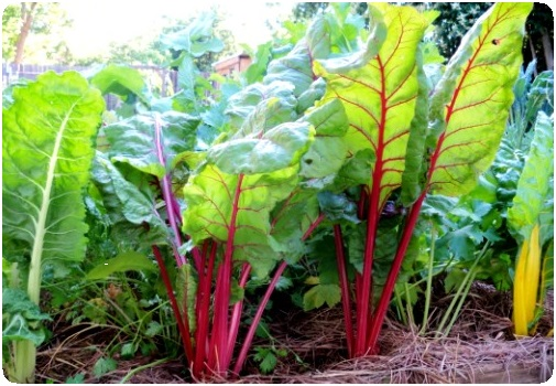 vegetable planted in organic garden