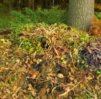 compost pile in open