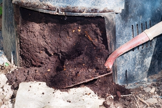 Composting, finished compost in bin