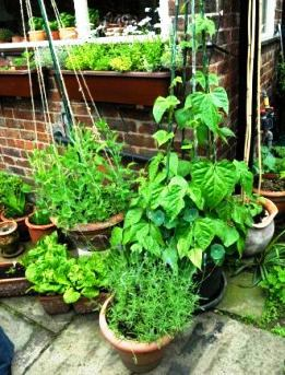 Container gardening, vegetables in different pots