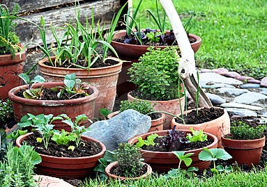 Container gardening growing ve ables in pots
