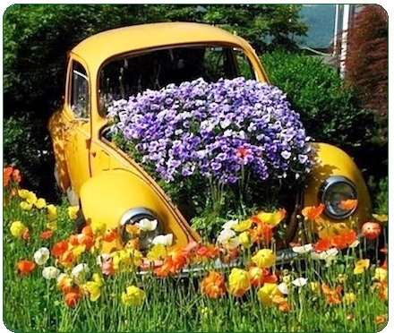 Growing Flowers.  Car with flowers blooming