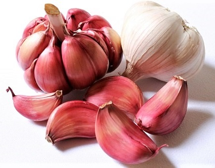 Garlic purple whole head