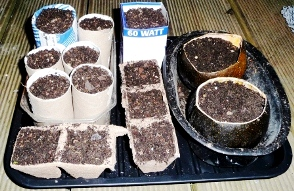 How to germinate vegetable garden seeds - in cardboard & toilet rolls
