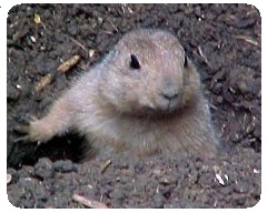 gophers garden pest