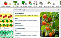 plan a vegetable garden - tomatoes