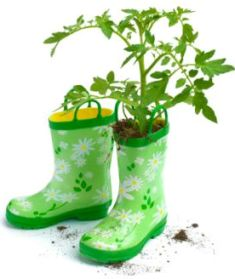 Gumboots vegetable sowing guides