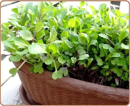 Container Gardening Ve ables and Herbs Plant varieties to grow in pots