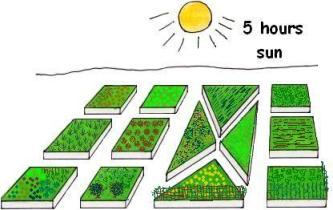 plan a vegetable garden. home garden layout when planning to grow, Garden idea