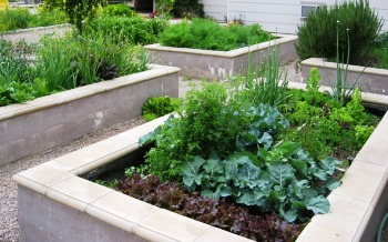 raised wooden bed gardens