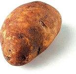 Potato varieties - Russet potato