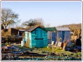 Shed on Allotment