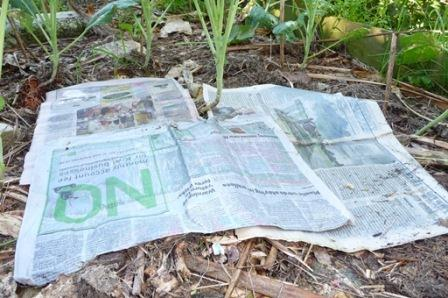 Smothering grass weeds with paper