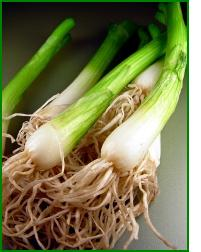 how to grow green or bunching onions