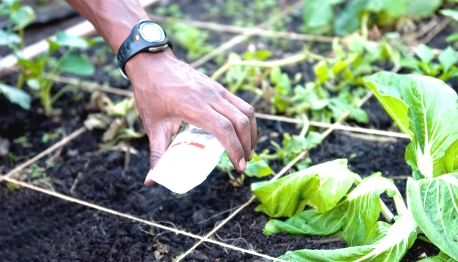 Sq ft Gardening - sowing seeds in a square foot garden