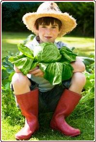 Teaching children to grow vegetables - Boy holding cabbage