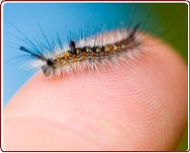 learning from nature - Very hairy caterpillar on child's finger