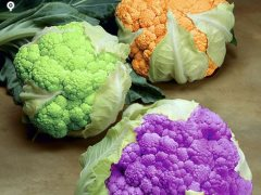 vegetables to grow coloured cauliflowers