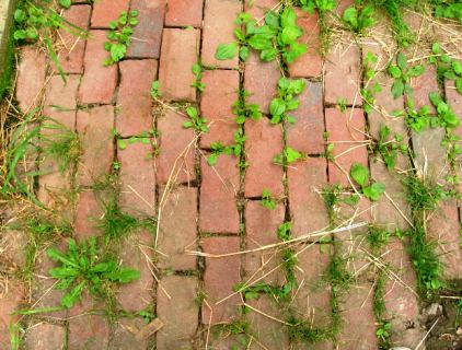 How to kill weeds in brick path