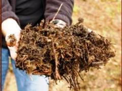 Composting and organic fertilizers
