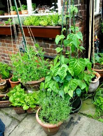 Container gardening soil with ve ables in different pots