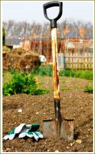 Growing potatoes - spade, soil and gloves