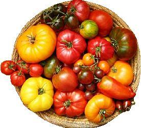 Heirloom tomatoes in basket - heirloom seeds