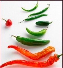 Hybridization - hybrid seeds, chillis