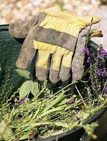 How to control garden weeds - bucket and gloves