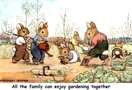 rabbit family in the garden