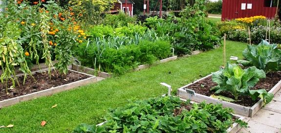 Rotating vegetable plots