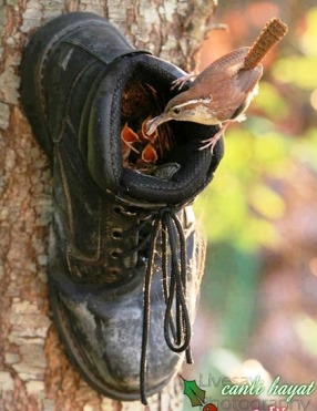 Baby birds fed in boot on tree