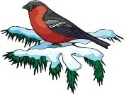 Bird red breasted on snow branch
