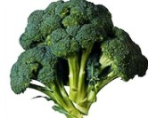 broccoli varieties-large headed green