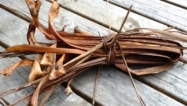 Cabbage tree leaves for kindling