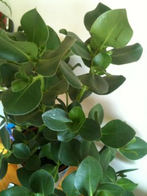 can you help me identify these house plants - House Plant Identification By Leaf