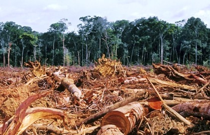 Clearing Amazon forrest