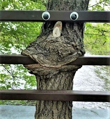 Tree eating fence with googly eyes