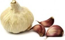 Garlic bulb and cloves - growing garlic