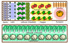 Growing veg planner