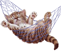 kitten in hammock