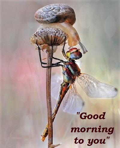 morning to you snail and dragonfly