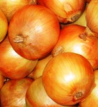 brown onions – growing onions