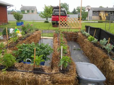 Straw Bale Gardening Is Fun And Has Several Great Advantages! But, There  Are To Be Found Many Mixed Reviews As To The Performance Of Plants Grown In  This ...