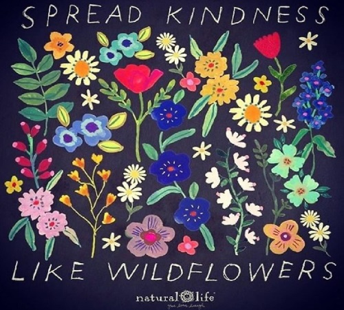 wildflowers spread like kindness