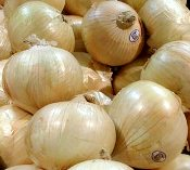 growing onions-vidalia-variety