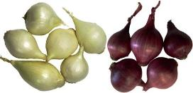 red pearl & white pearl onion varieties